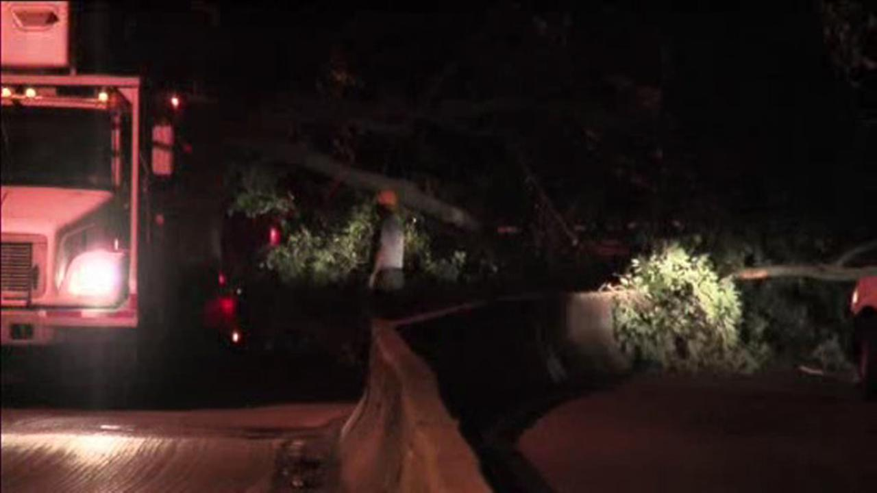Part of Lincoln Drive was closed overnight after a large tree fell across the road in Fairmount Park.