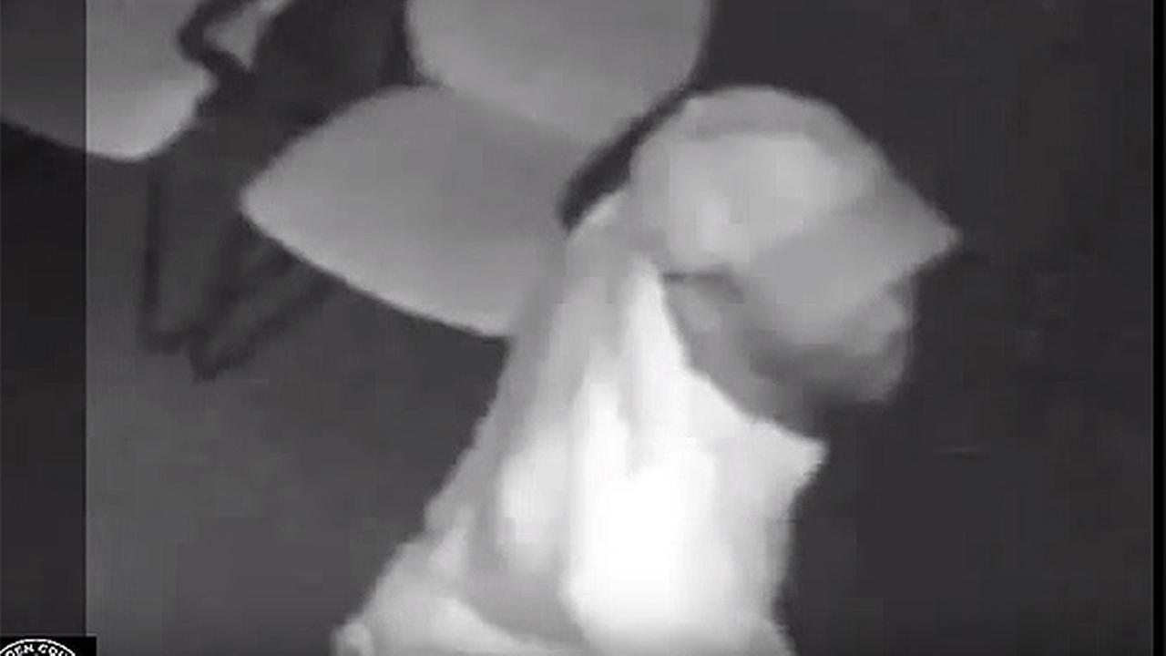 Burglary suspect caught on camera in Camden