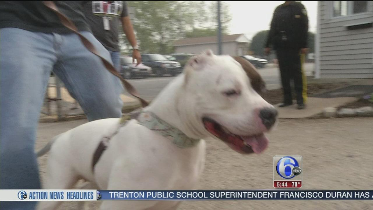 VIDEO: Dog gets second chance