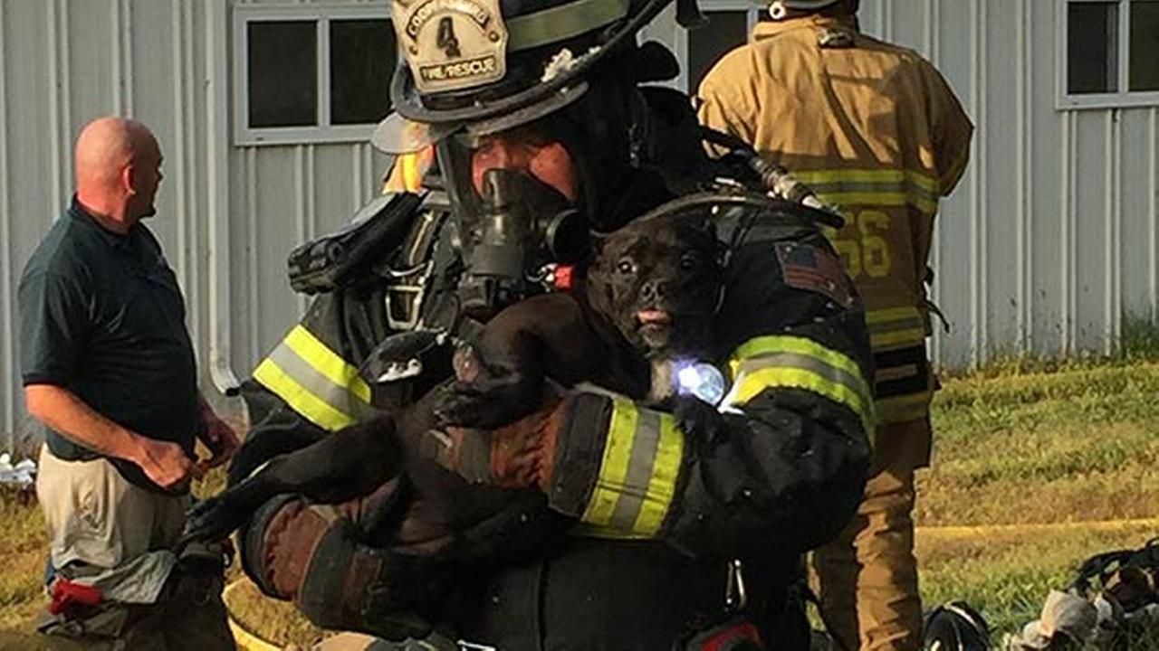 20 dogs rescued from burning kennel in Bucks Co.