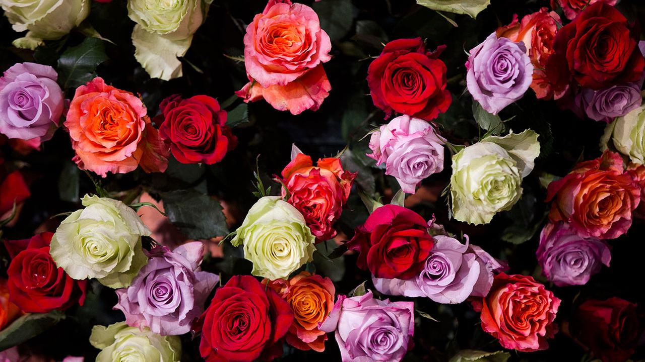 Roses file photo