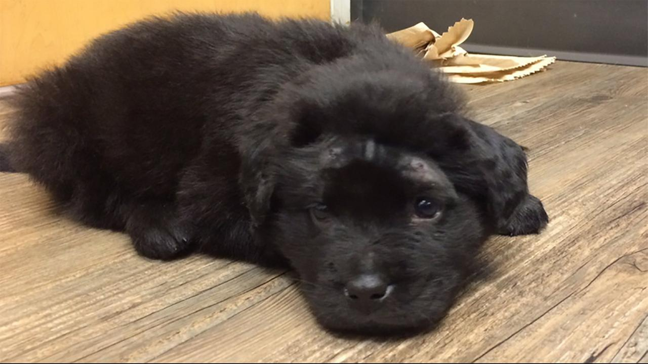 Teens arrested after puppy shot with BB gun