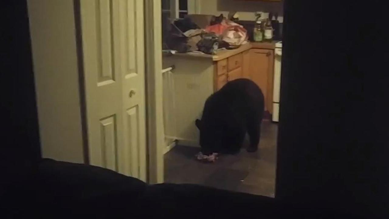 The family caught the furry intruder on camera