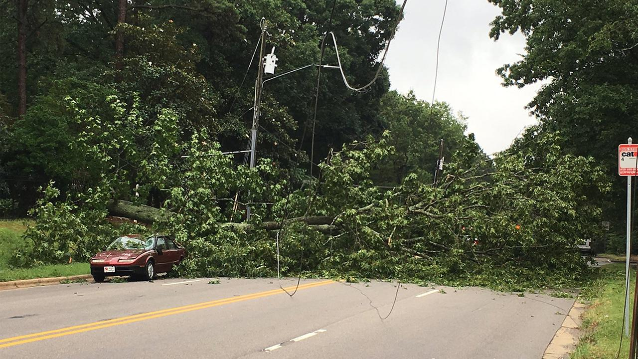 Wade Avenue closed after tree falls on car