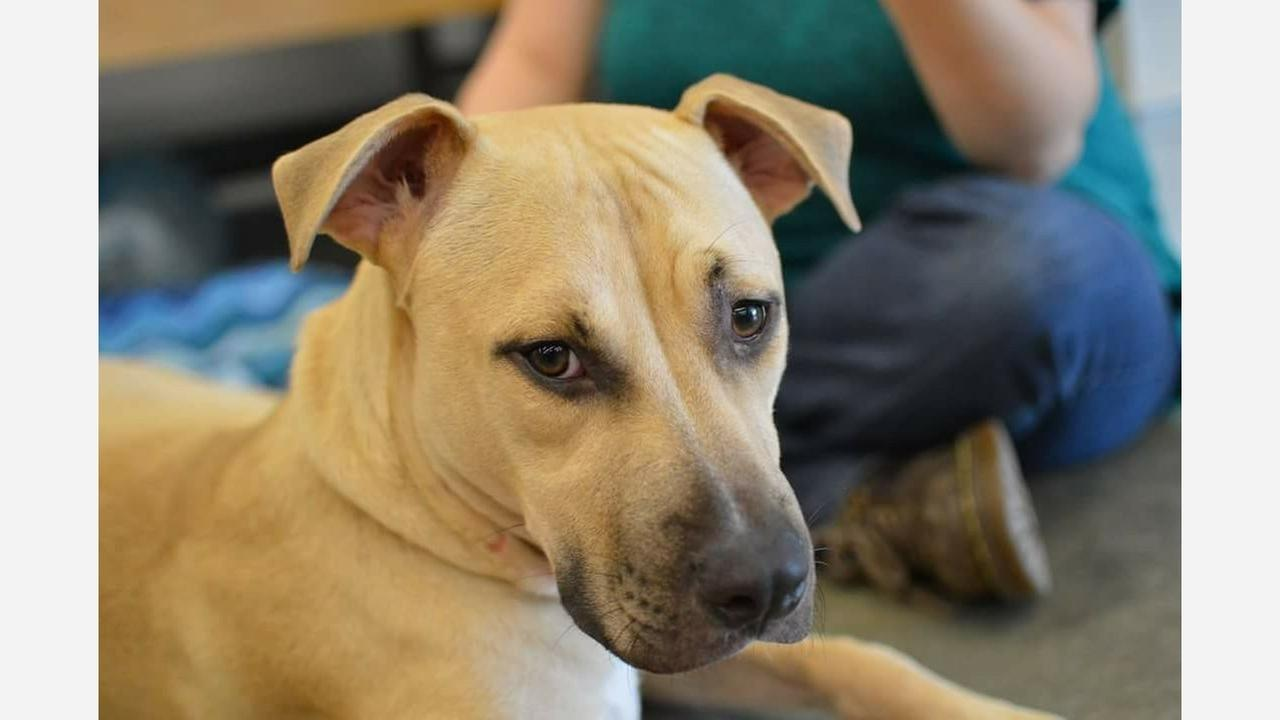 Why the Franklin County SPCA differs from the rest