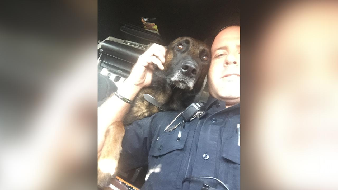 Roanoke Rapids K9 officer gets new body armor