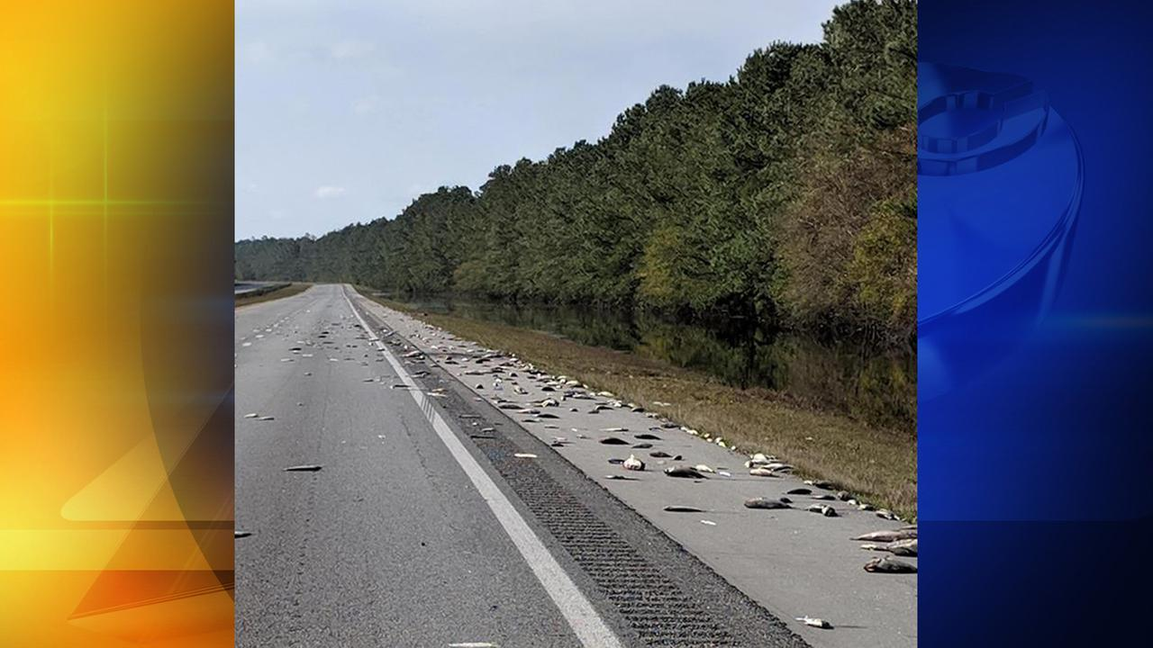 Fish stranded on I-40 after Florence floodwaters recede