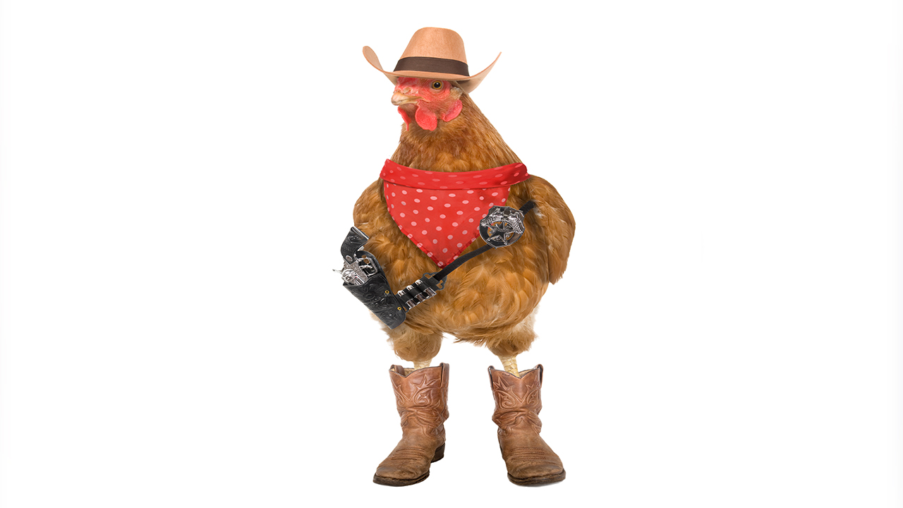 Rooster dressed up like a cowboy