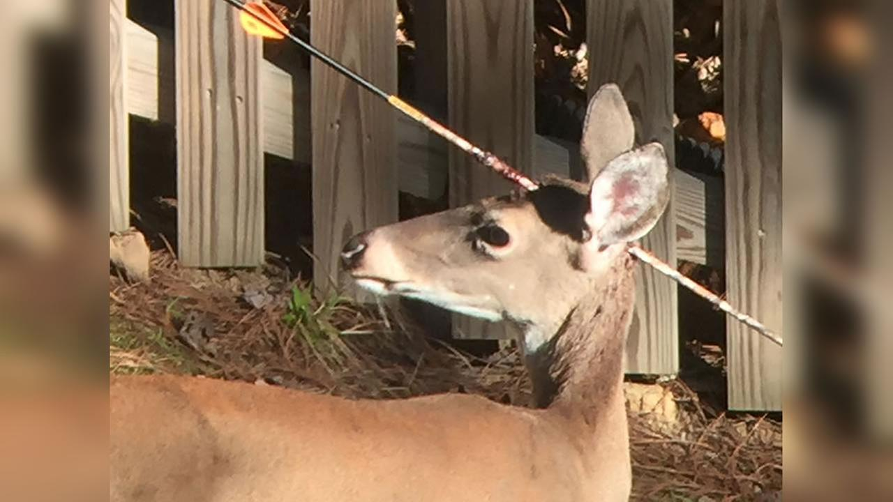 The animal appears to have been shot by a hunter.
