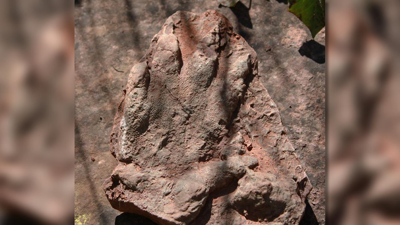 This photo shows a footprint of a dinosaur discovered in early April by a person out walking in Olesa de Montserrat, 40 kilometers north of Barcelona.
