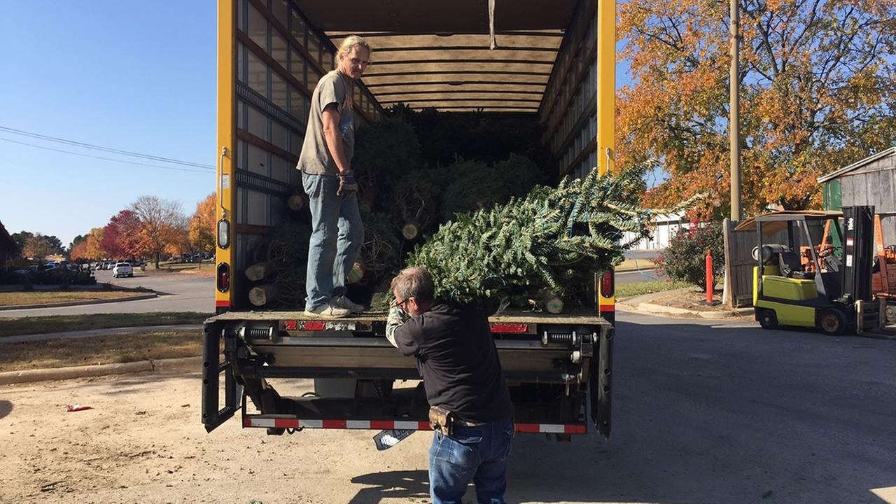 Loading Christmas trees in Raleigh Wednesday.