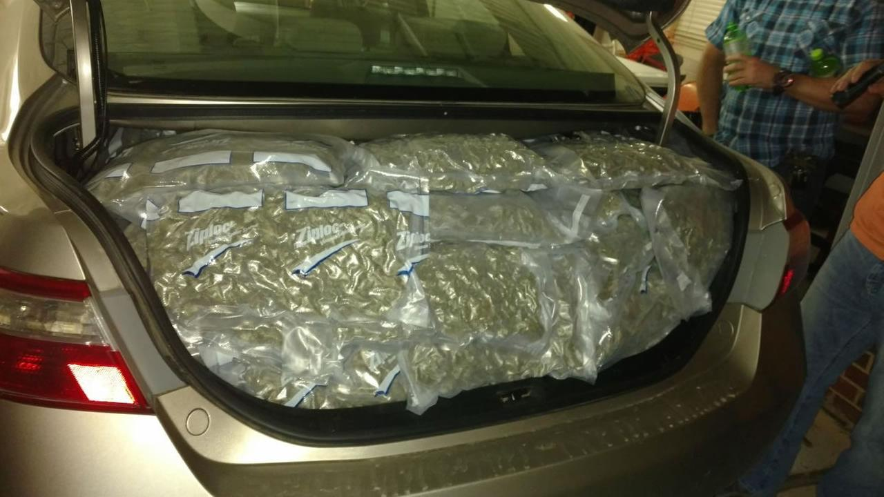 The car trunk was jammed full of marijuana.