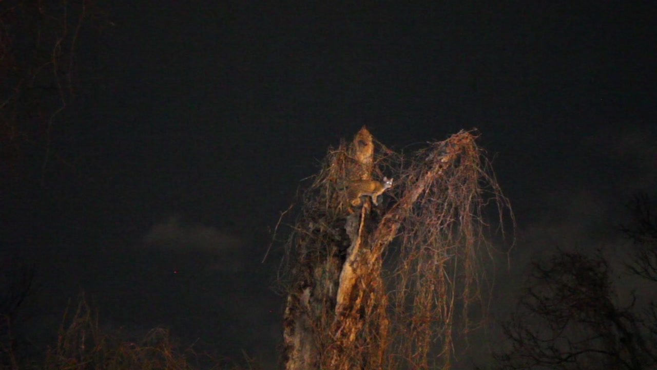 A Fayetteville woman is worried and asking for help - saying her cat has been stuck in a tree for nearly a week without coming down for food or water.