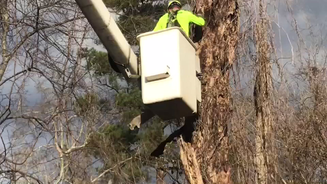 Stedman couple rescues cat stuck in Fayetteville tree