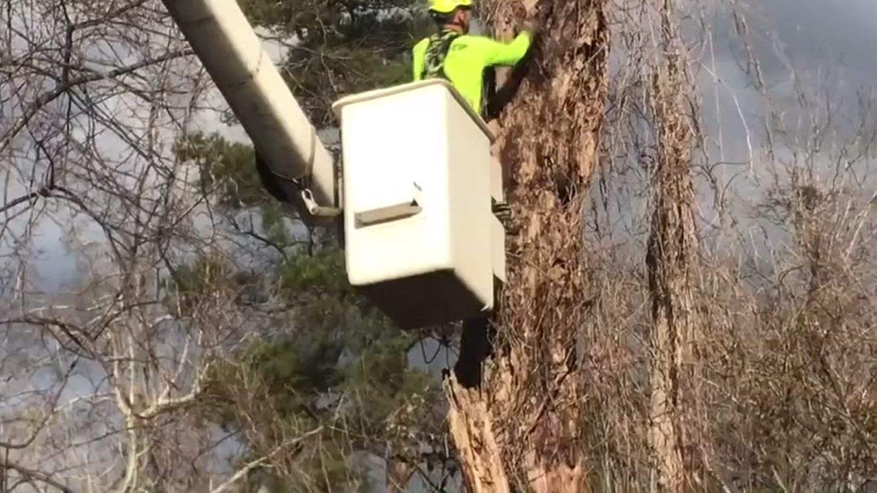 Stedman couple drives to Fayetteville, saves cat stuck in tree