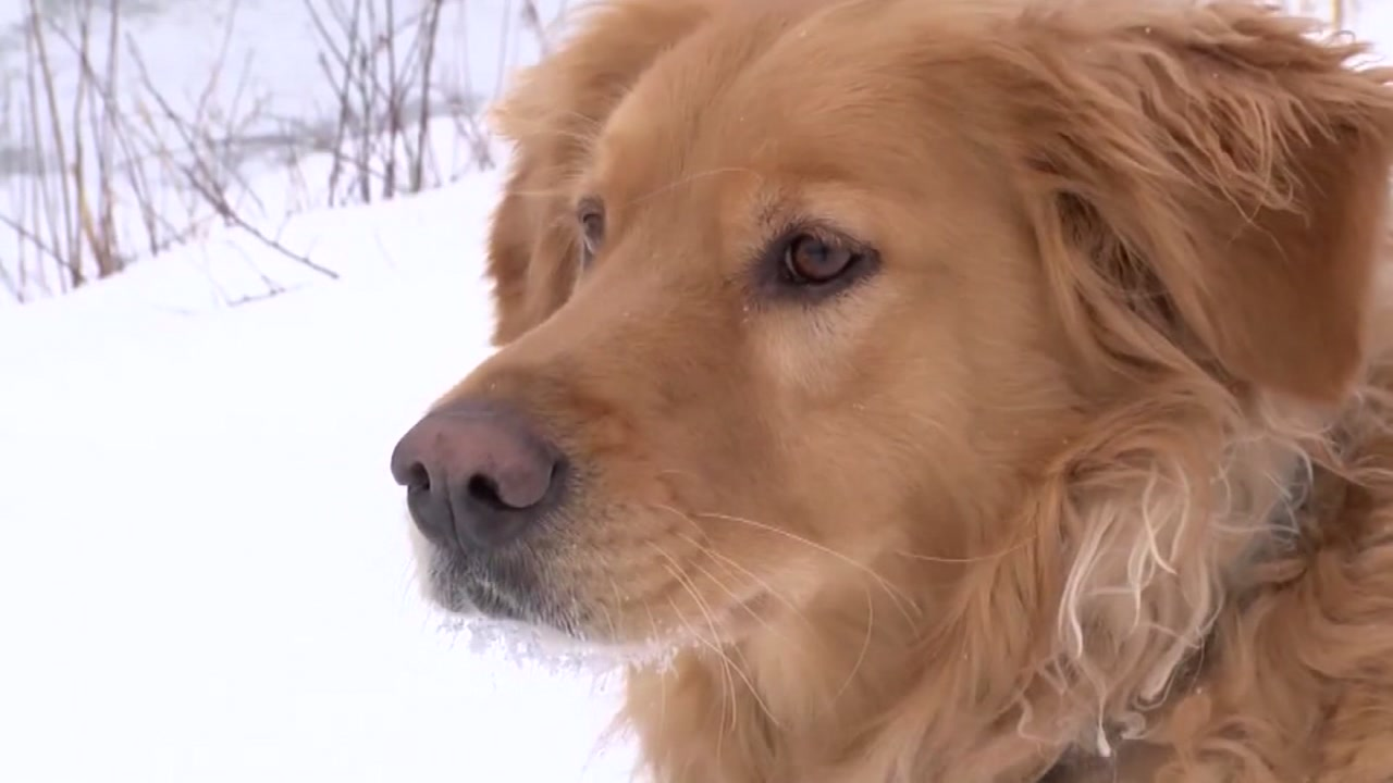 A daring rescue was made to save Maxx, a dog trapped in an icy river.