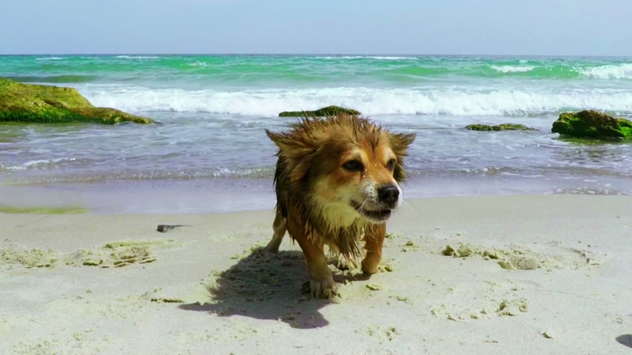 Top 5 pet-friendly beaches in NC