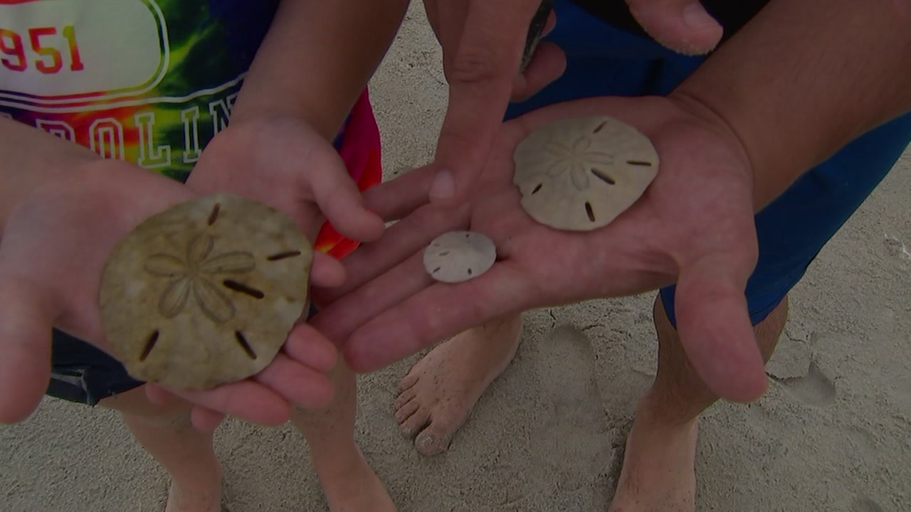 Near Morehead City, a little sandbar is a great place to hunt for sand dollars.