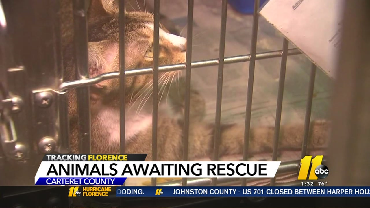 Dogs, cats need rescuing from Carteret County Humane Society due to Florence flooding