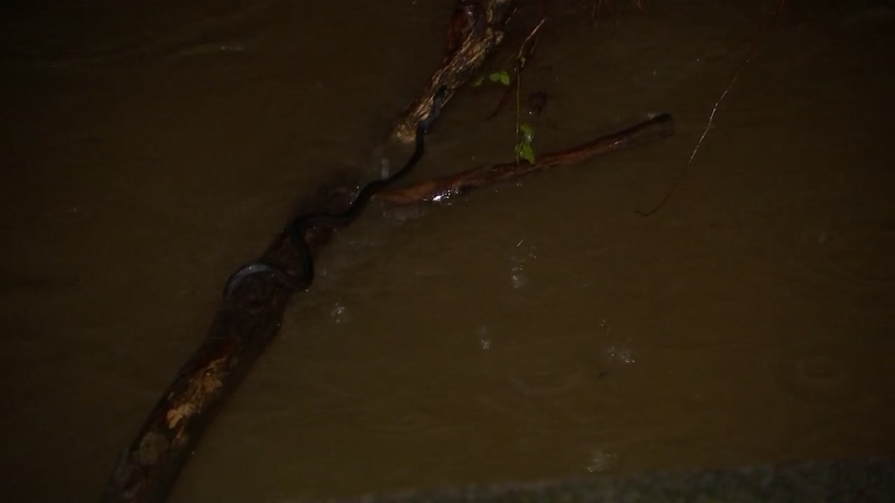 Be careful walking through floodwaters! There could be snakes lurking around