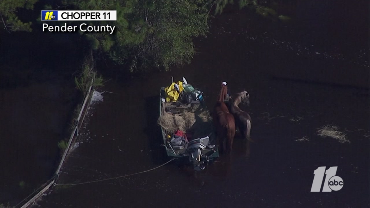 Pender County residents feed horses in high flood waters.