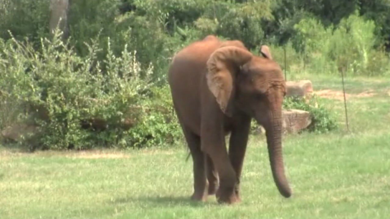 Zoo reopens