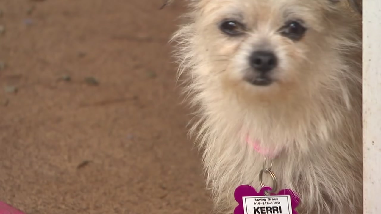 Many dogs rescued from the path of the storm are ready for adoption in the Triangle.
