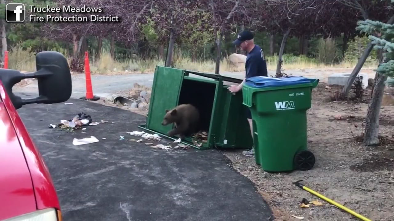Firefighters come to the rescue of 3 bear cubs trapped in a garbage bin