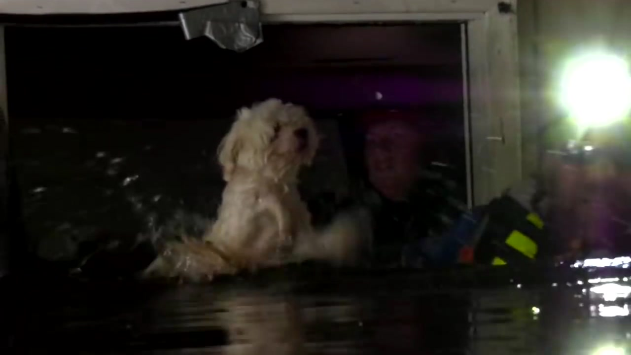 The Humane Society of Missouri saved a dog that was left stranded in a flooded house for nearly a week.