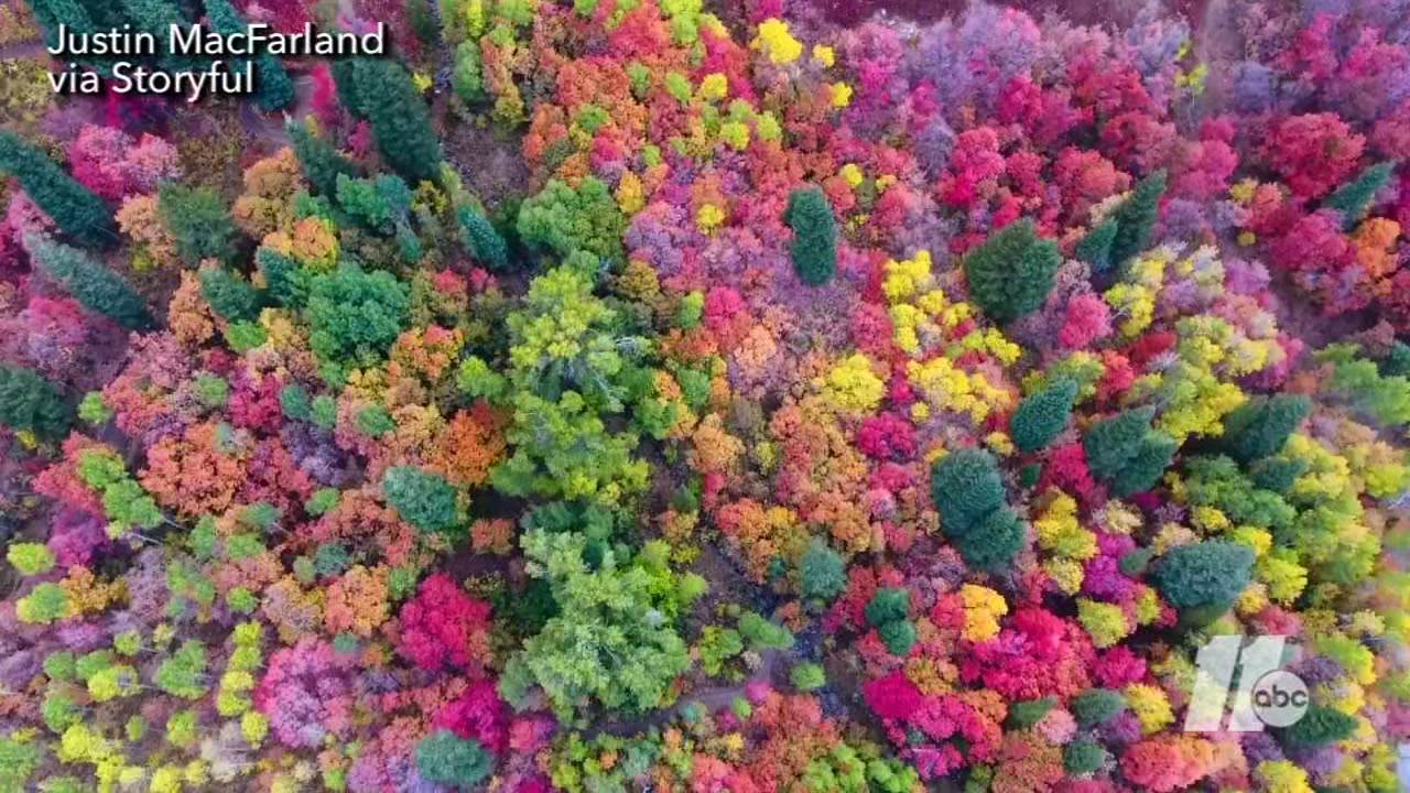 Drone video captures an awe inspiring view of fall colors in Ogden Valley, Utah
