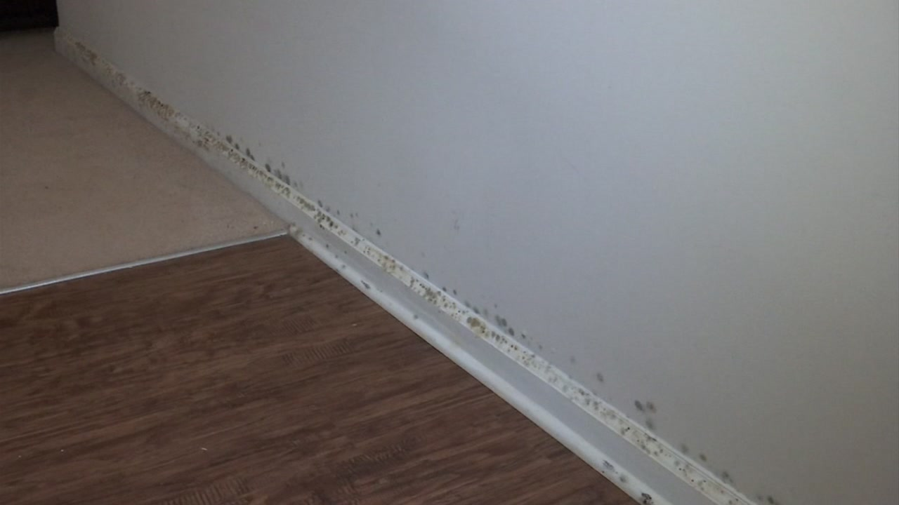 Florence causes mold and mildew to develop in a Cumberland County home.