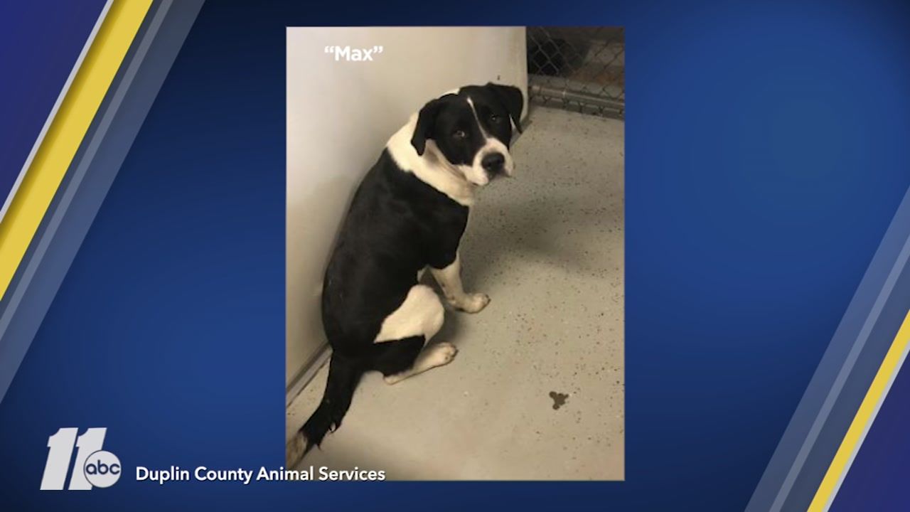 Dogs in Duplin County animal shelter are out of time.