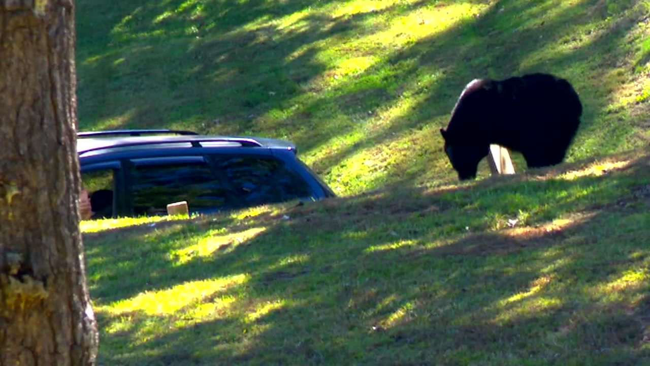 There has been another bear sighting in Asheville, and this time it was at a cemetery.