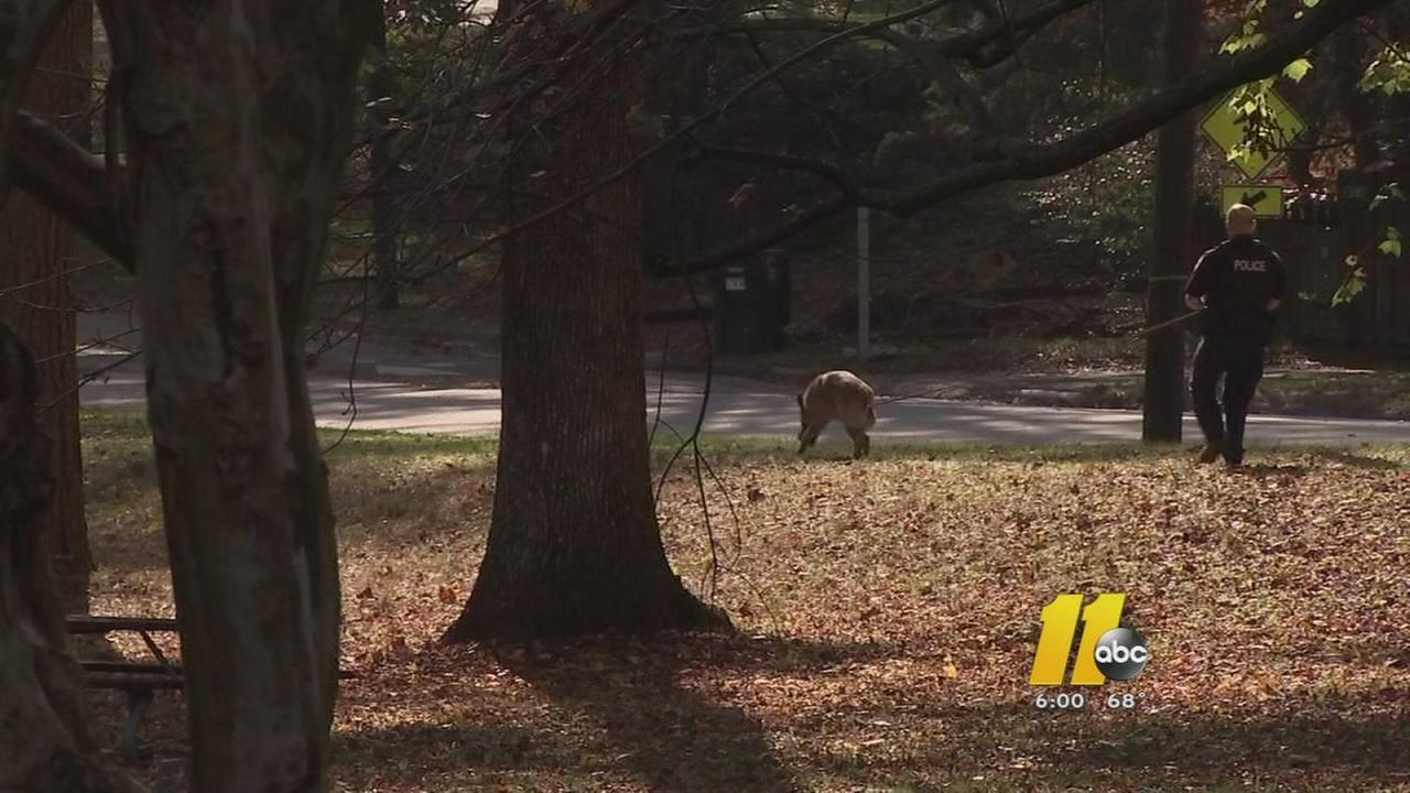 Women attacked on Durham trail