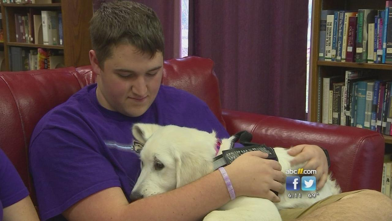Epileptic boy to get therapy dog