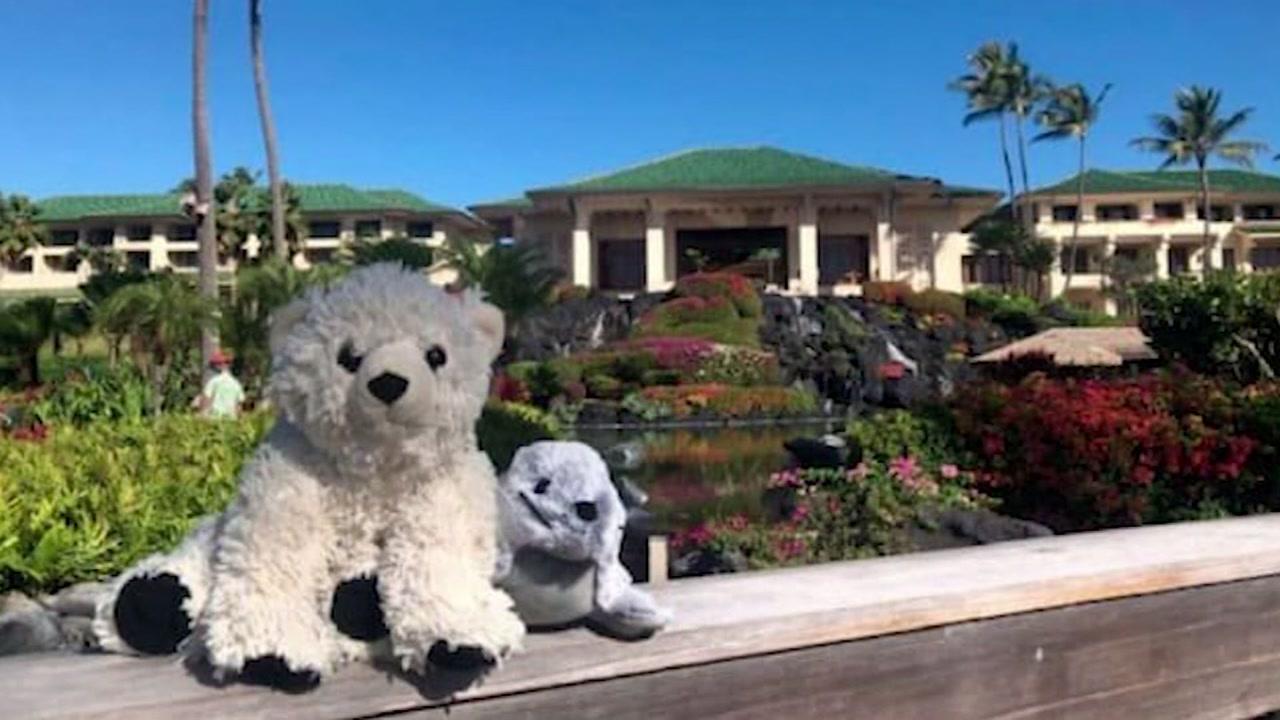 Lost teddy bear gets luxury stay at hotel in Hawaii
