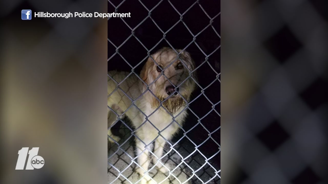 Two dogs were left alone and cold in a dog park in Hillsborough on Sunday night.