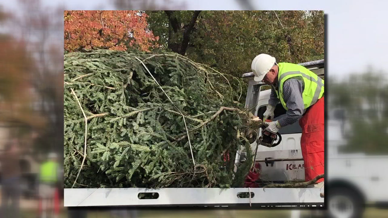 On Tuesday, a 24-foot Chrismas Tree arrived at Fort Bragg at the main post parade field.