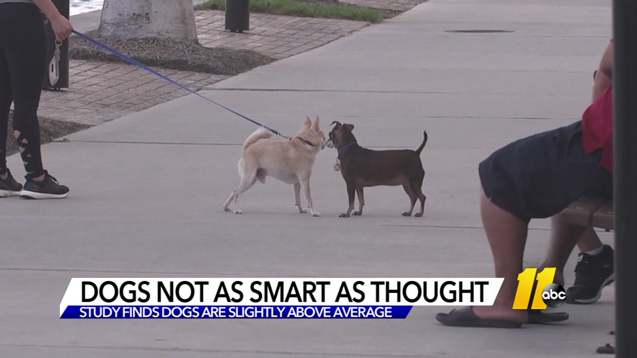 Dogs are not as smart as you thought.