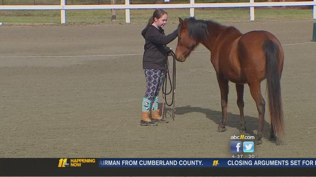 Horses helping at risk girls