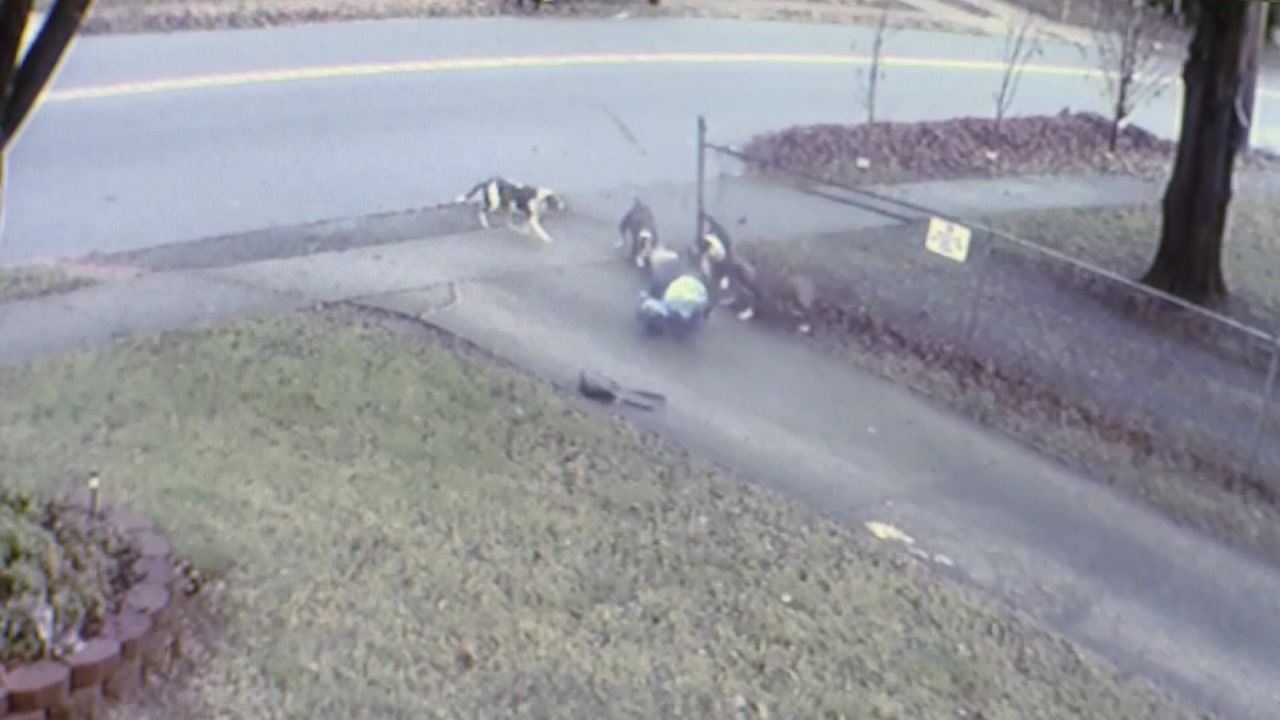 A pack of dogs attacked a North Carolina woman as she walked down a city street.