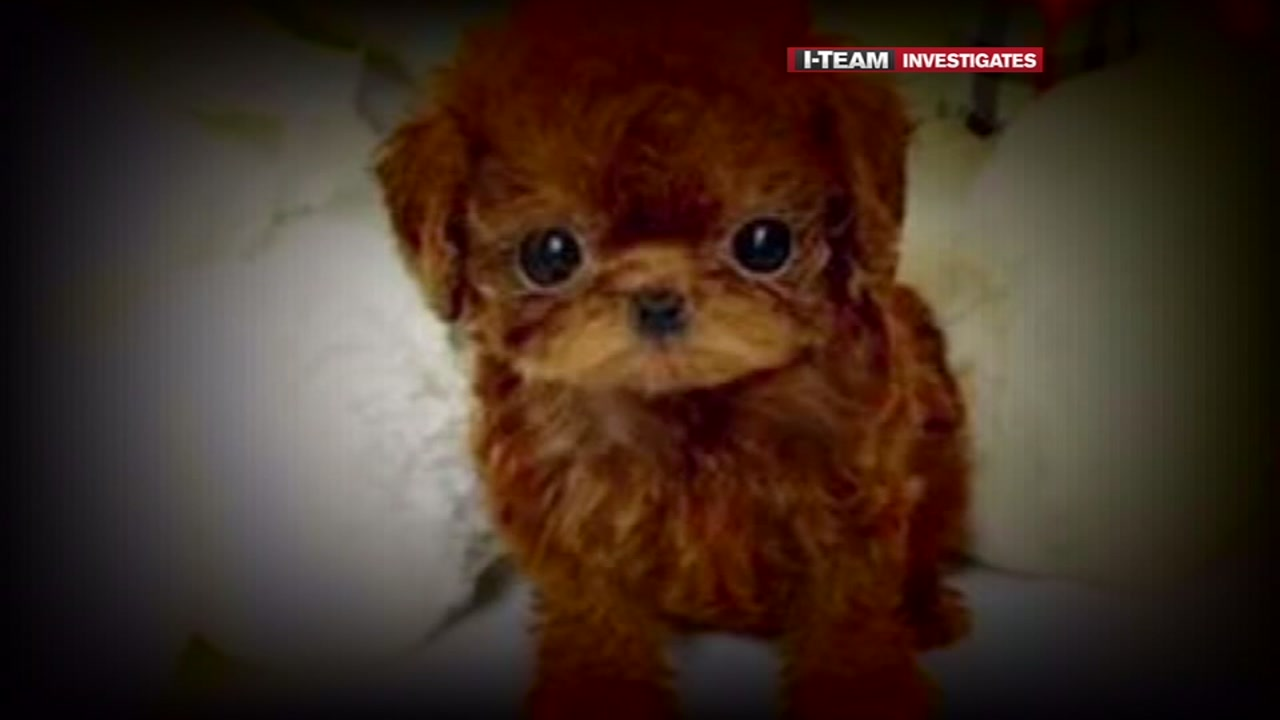 The BBB is warning against fake online advertisements that are claiming to sell puppies.
