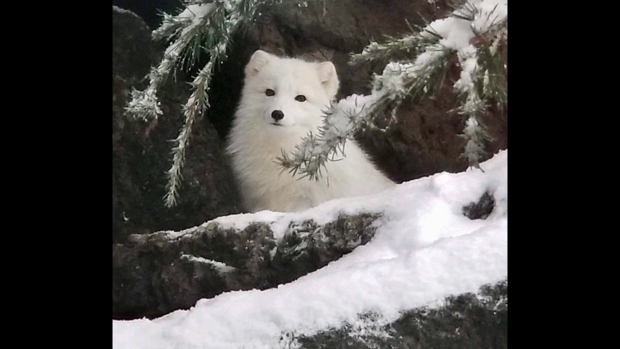 North Carolina Zoo closes for snow day