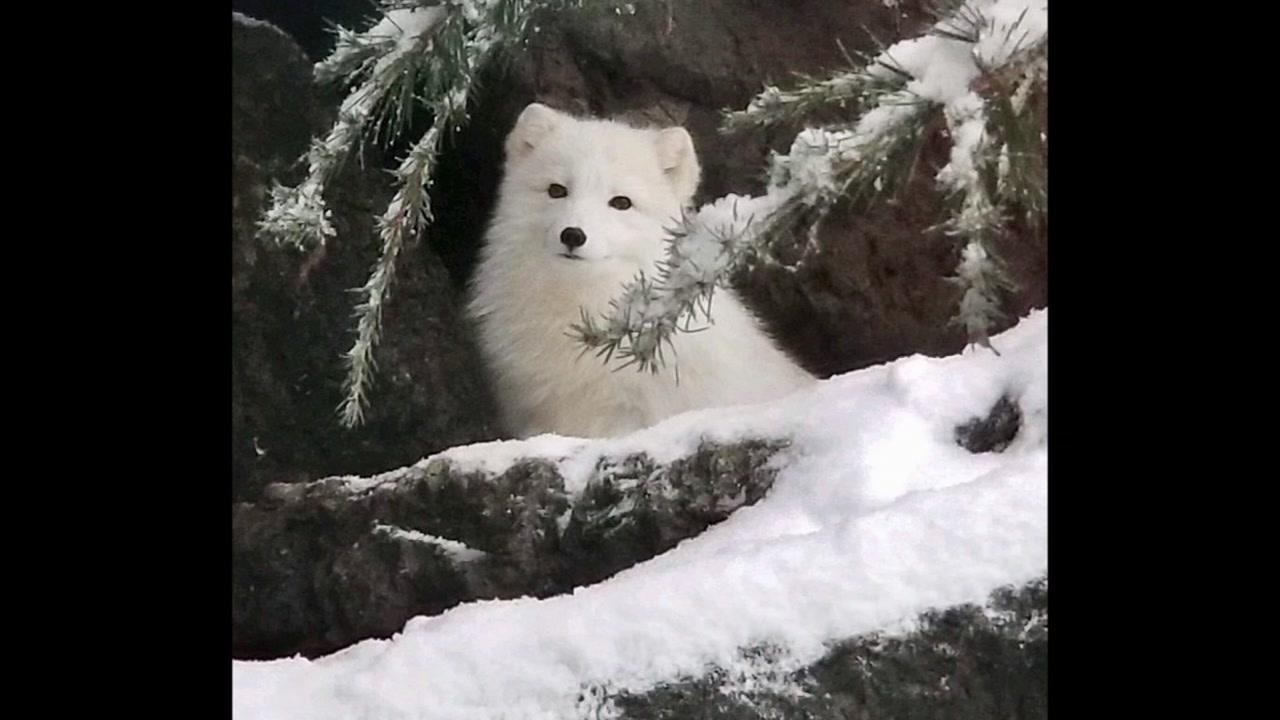 North Carolina Zoo closes for snow day