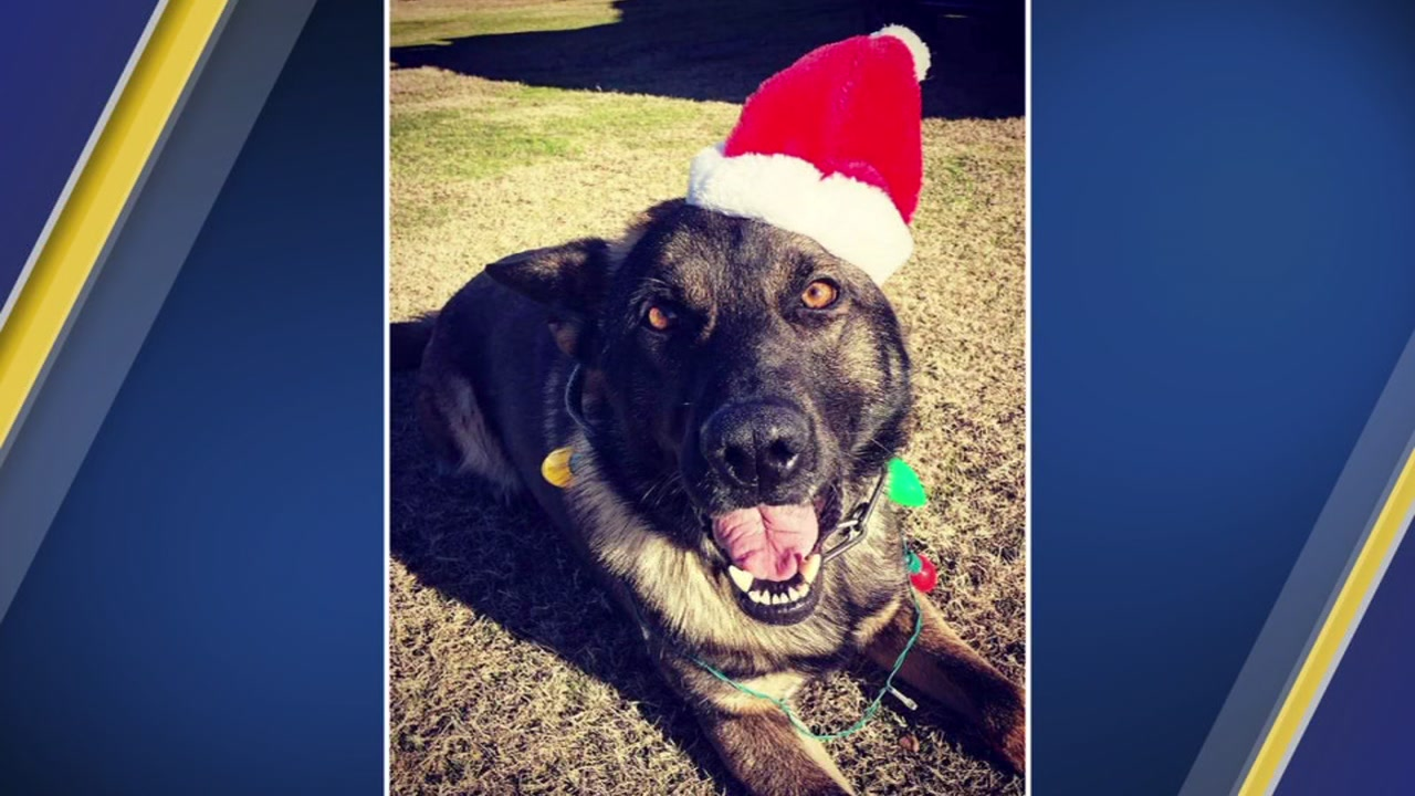 Fayetteville PD K-9 officers compete in Christmas vote contest.