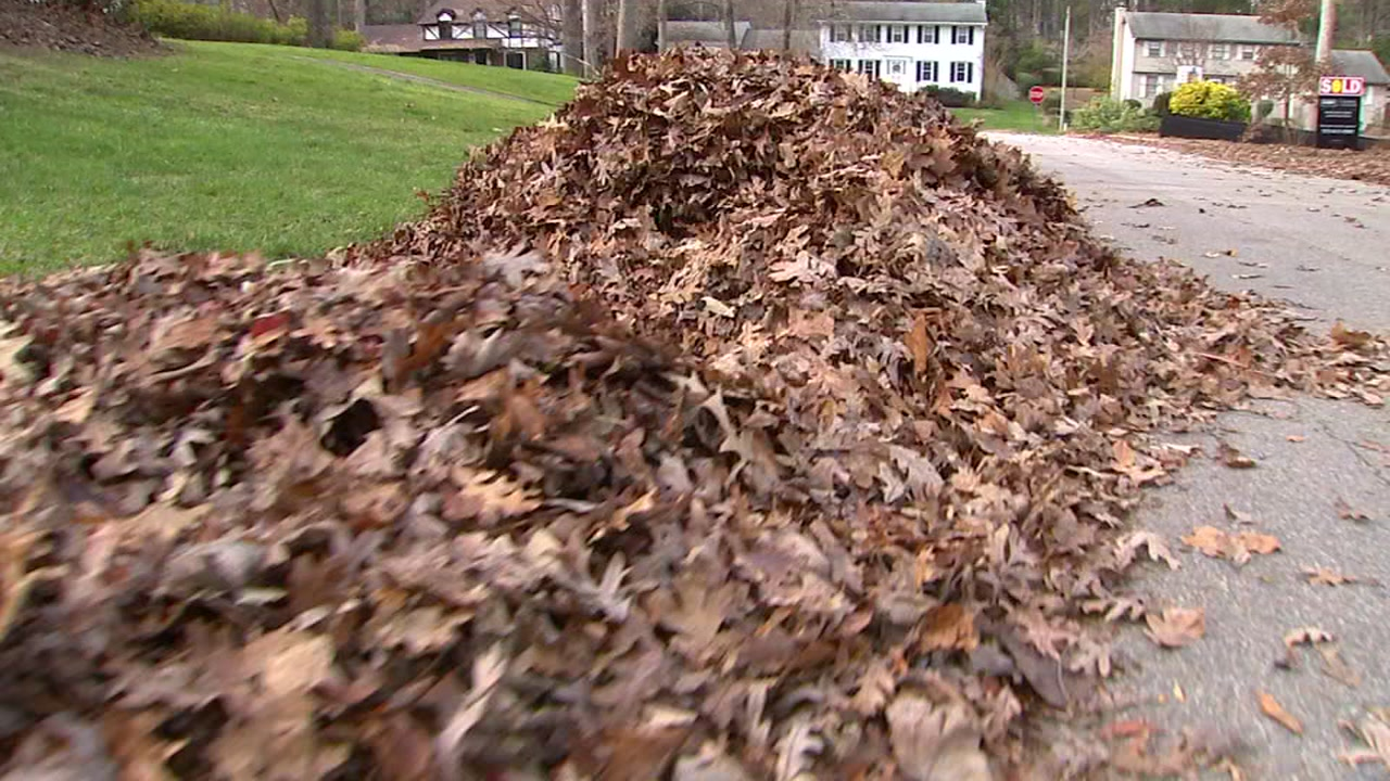 Donna Manla was raking leaves on Wednesday afternoon when she made note of how many leaves lined the street.