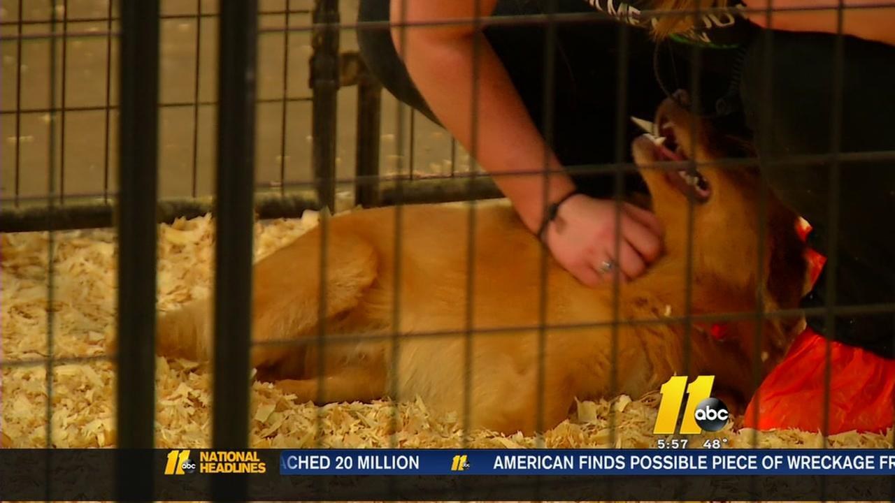 Hoke County animal rescue update