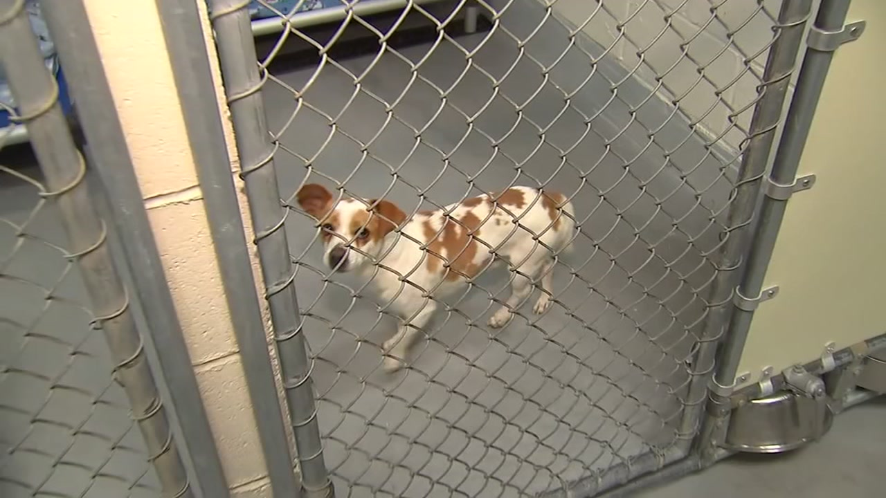 Wake County Animal Center encourage adoptions as holiday season fills shelters