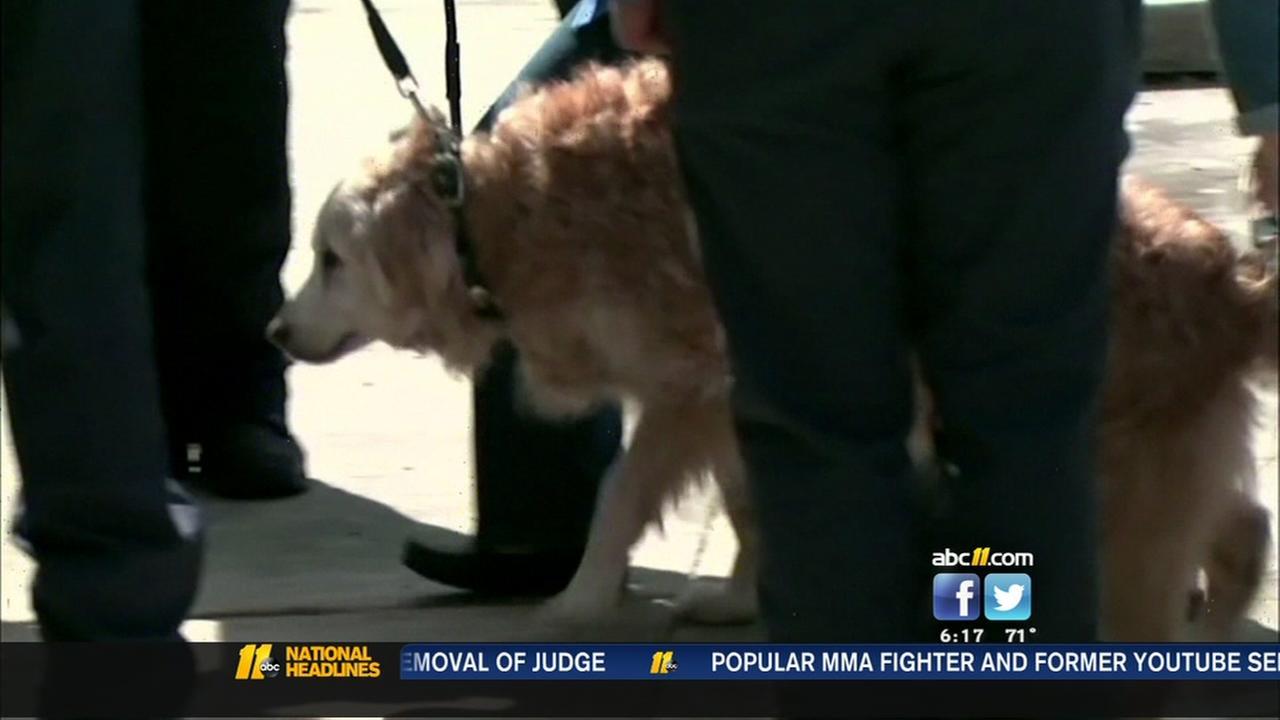 Last living 9/11 rescue dog dies