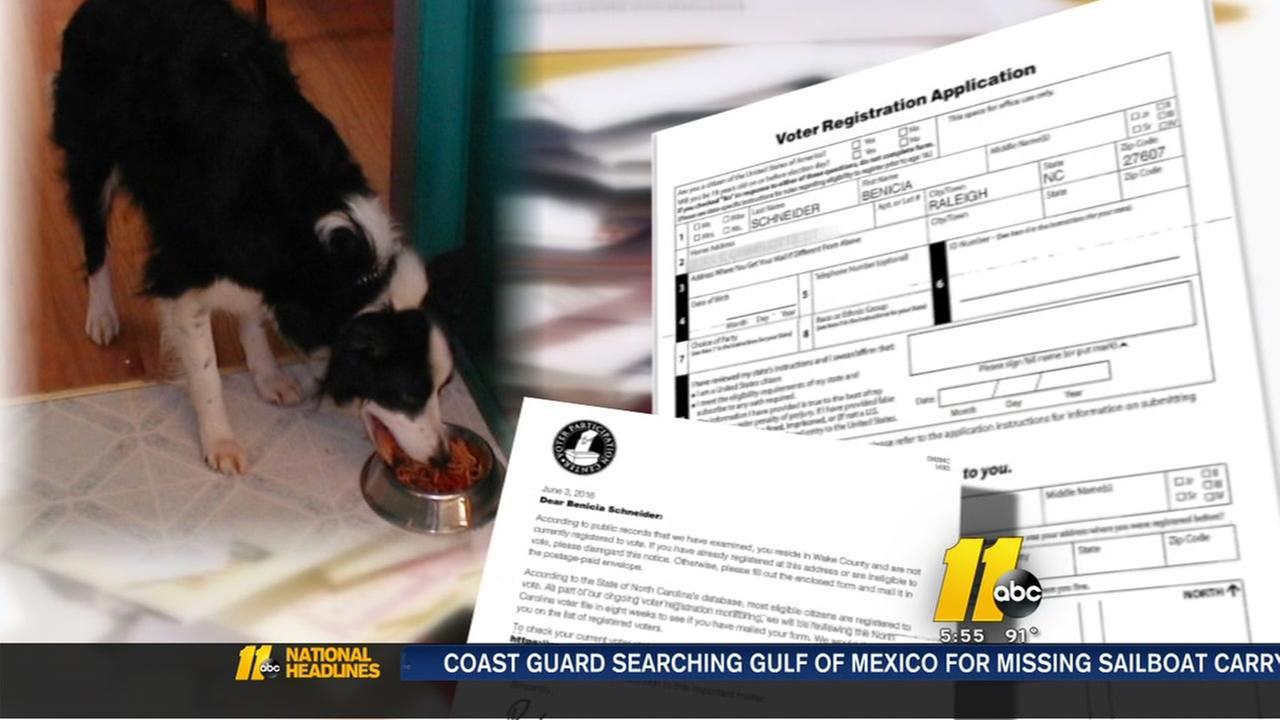 Dog gets voting application